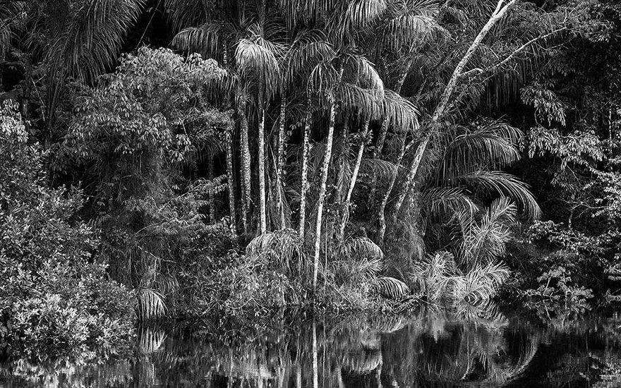 Salgado Amazônia